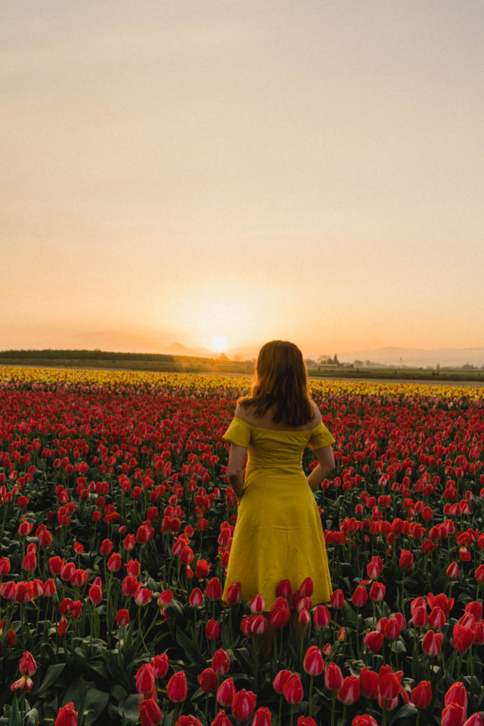 A Portland Oregon Day Trip To Wooden Shoe Tulip Festival